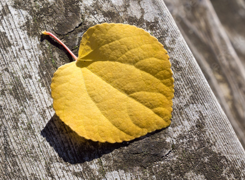Yellow leaf on wooden steps