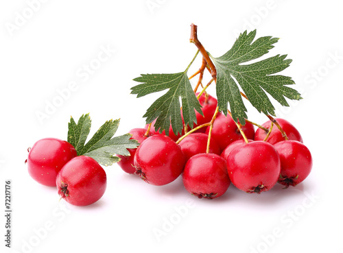 Canvas Print Hawthorn berry