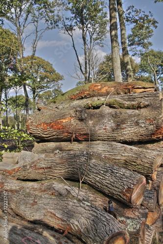 Papiers peints Bois Tas de bois en forêt,Picardie