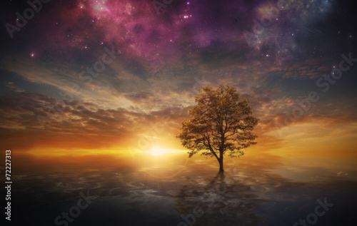 Photo sur Toile Marron chocolat Surreal tree in lake