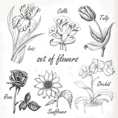 Hand drawing set  of flowers