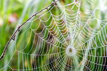 Spinnennetz Mit Morgentau :)