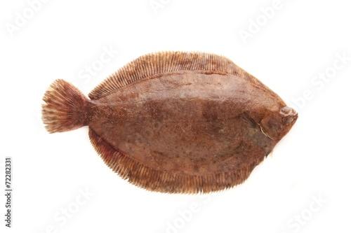 plaice fish isolated on white background Fototapet