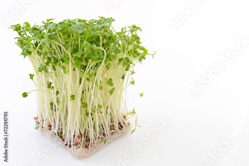 In de dag Verse groenten 新鮮なカイワレ大根