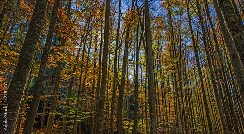Foto op Plexiglas Landschappen autumnal forest