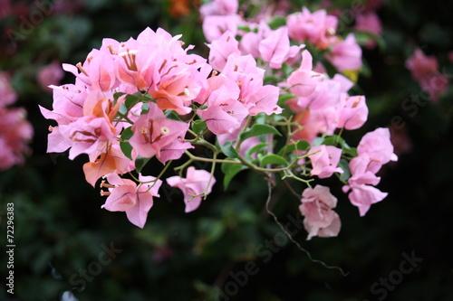Stampe  fleur