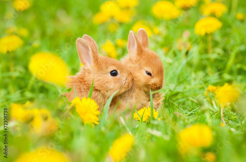 Canvas Print Two little sweet rabbits sitting in flowers outdoors
