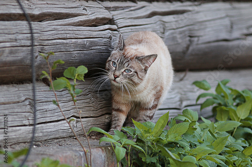 Photo  domestic cat in the village