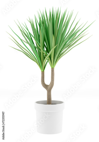 potted palm tree isolated on white background Wall mural