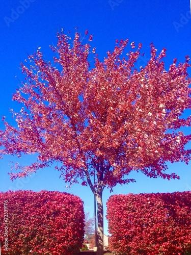 Poster Lichtroze Symmetry, autumn landscape