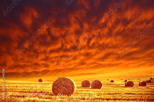 golden field and red sky Poster