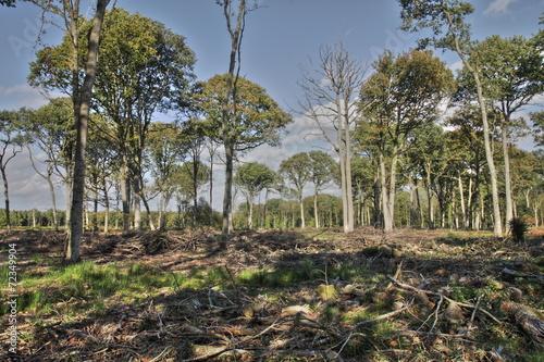 Papiers peints Bois Exploitation forestière (Saint-Gobain dans l'Aisne)
