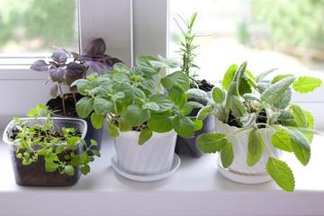 Fototapeta Przyprawy herbs on window