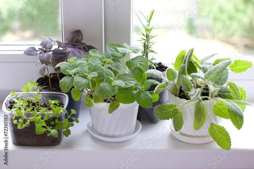 Fototapeta herbs on window obraz