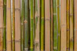 Zielone i żółte bambusy