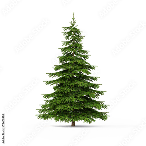 Fotografia Spruce on white