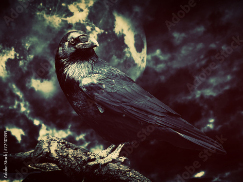 Black raven in moonlight perched on tree Canvas Print