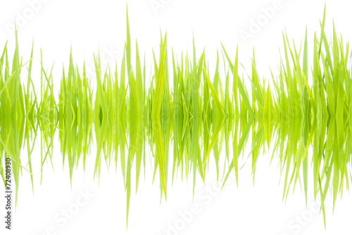 Keuken foto achterwand Paardenbloem sound waves 001