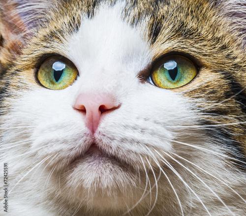 Fototapety, obrazy: a cat eyes close up