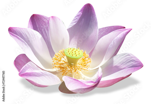 Deurstickers Lotusbloem lotus