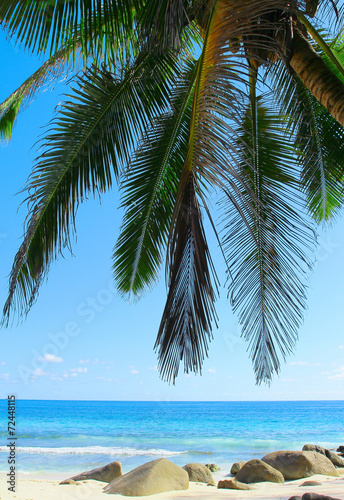 Foto op Canvas Tropical strand Overhanging Exotic Beach