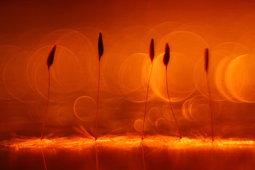 Panel Szklany Dmuchawce abstract blurred natural background orange dandelion seeds