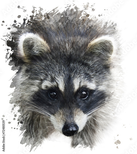 Carta da parati Raccoon Portrait