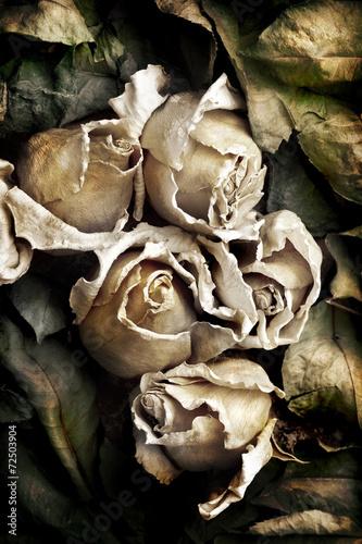 suszone-kwiaty-roz