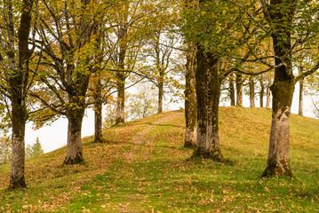 Ahornbäume im Herbst