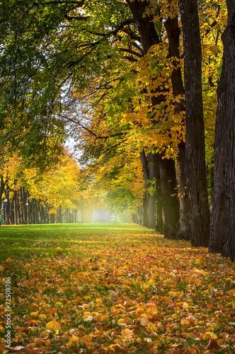 piekna-romantyczna-aleja-w-parku-z-kolorowymi-drzewami-jesien