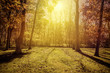 Sunlight in the park - autumn season