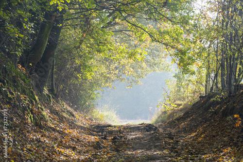 jesienia-drogi-lesnej