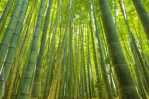 Foto op Plexiglas Bamboe Bamboo Forest in Japan. Bamboo Groove in Arashiyama, Kyoto.