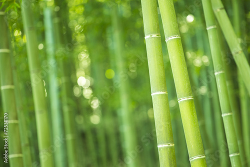 Bamboo Forest in Japan. Bamboo Groove in Arashiyama, Kyoto.