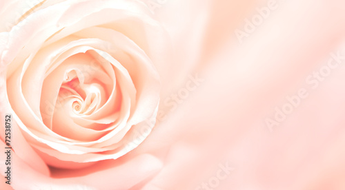 Staande foto Roses Banner with pink rose