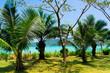Coconut Coast Idyllic Island