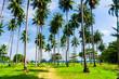 Idyllic Day Coconut Getaway