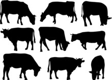 Nine Cows Silhouettes Isolated On White