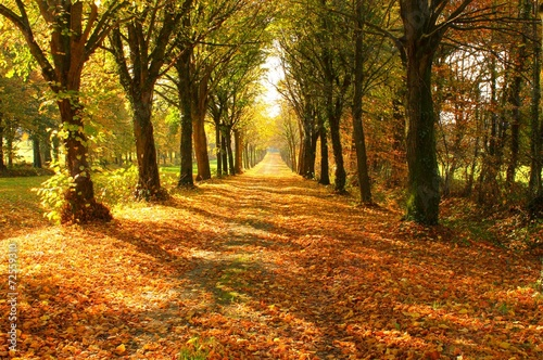 Garden Poster Road in forest Tree lined Pathway