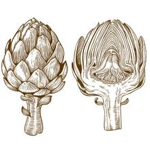 Engraving Illustration Of Green Vegetables Artichoke