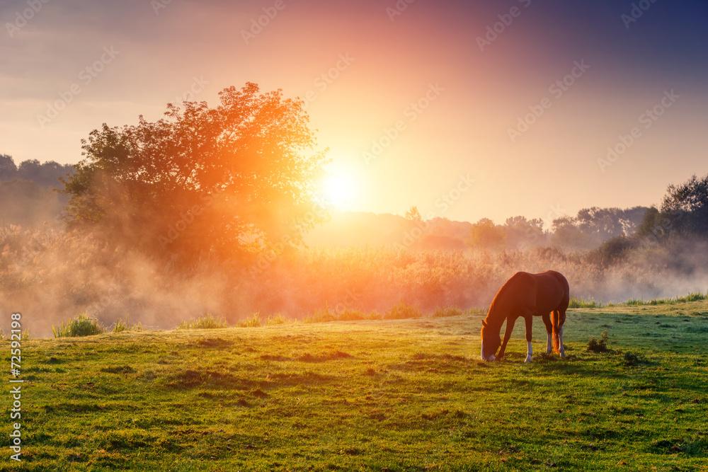 Fototapety, obrazy: horses grazing on pasture