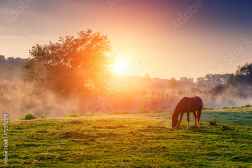 horses grazing on pasture Wallpaper Mural