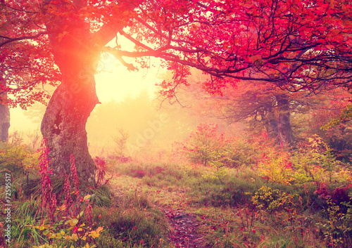 autumn leaf in forest