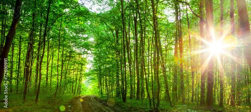Fototapeten Wald forest trees.