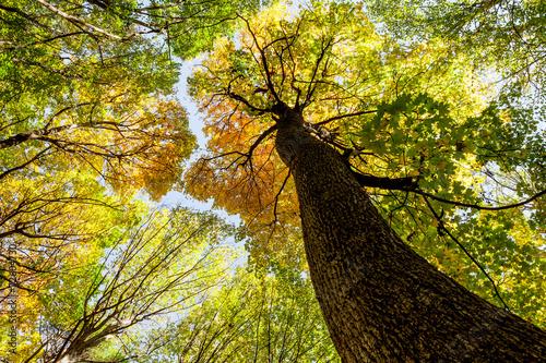 Fototapeten Wald autumn