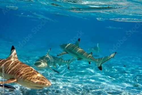Carta da parati Sharks over a coral reef at ocean
