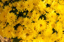 Mums Bouquet