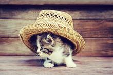 Little Kitten Under The Hat