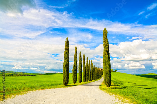 Foto  Tuscany, Cypress Trees white road rural landscape, Italy, Europe