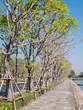Row of tree along street